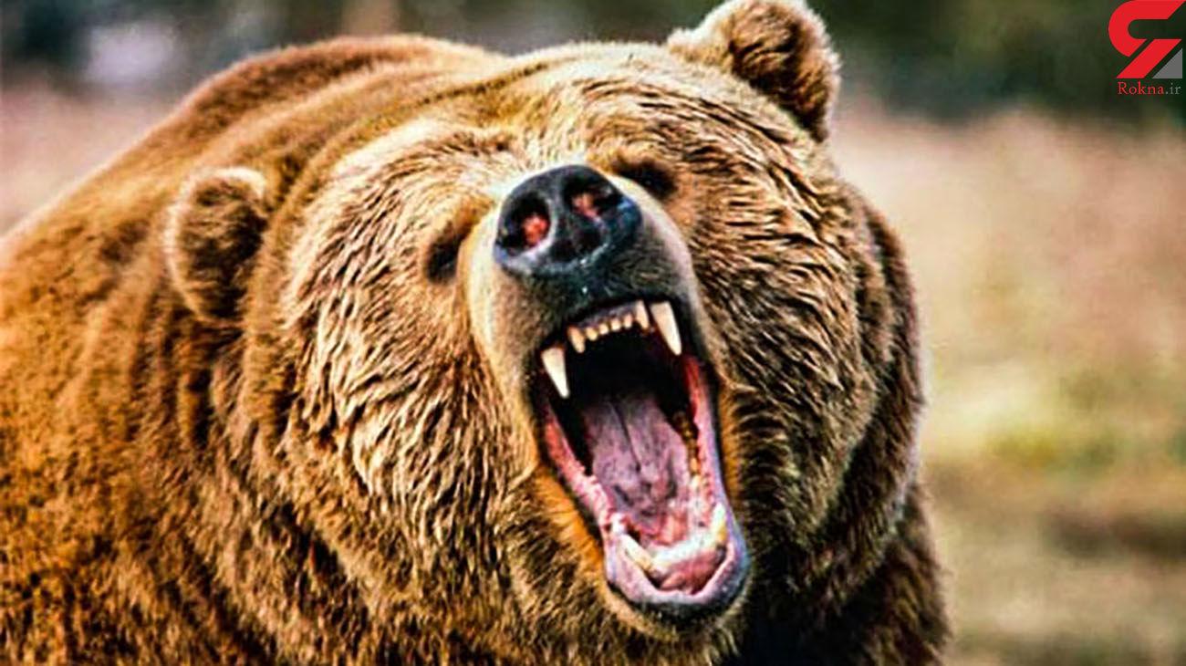 حمله خرس جوان ایذه ای را تیکه پاره کرد + جزئیات