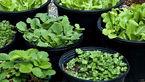 طریقه کاشت انواع سبزی های ارگانیک در خانه