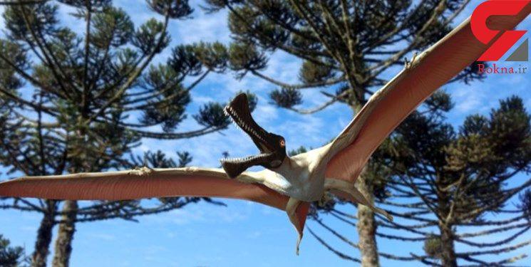 کشف فسیل خزنده پرنده ماقبل تاریخ در استرالیا + عکس