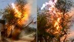 ارواح درختی سبز  را در چند ثانیه خاکستر  کردند!+ فیلم و عکس