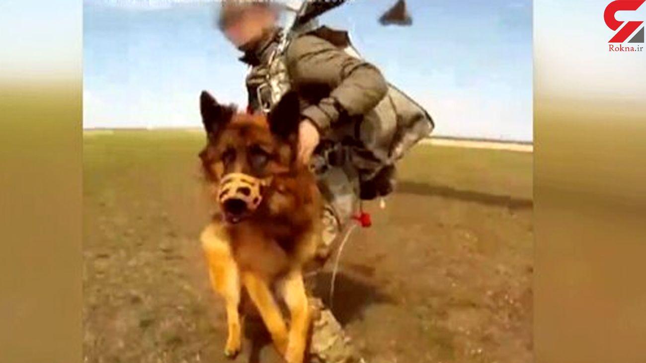 چتر نجات سگ ها هم طراحی شد