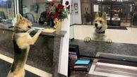 اقدام دیدنی سگ گم شده در ایستگاه پلیس + عکس