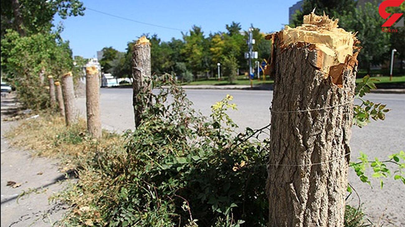 توقف عملیات قطع درختان در سقز