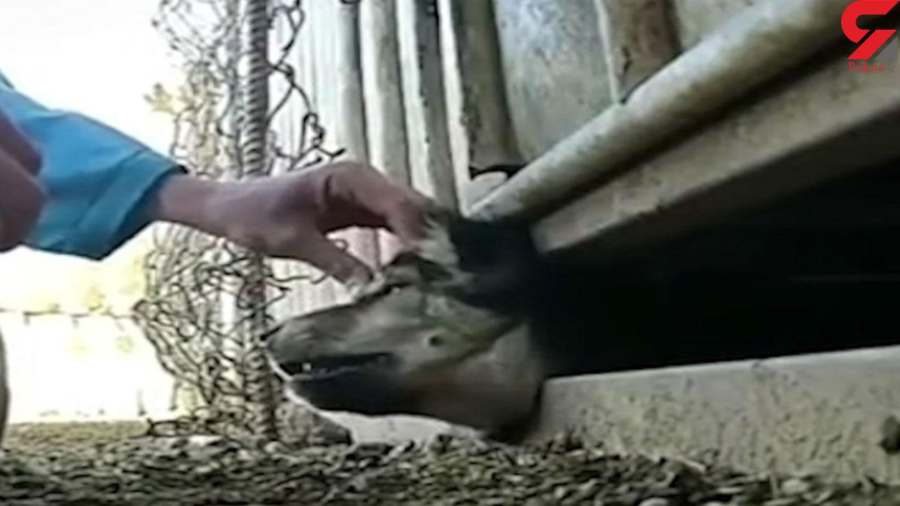 فیلم نجات سگ از مرگ توسط جوان دهلرانی