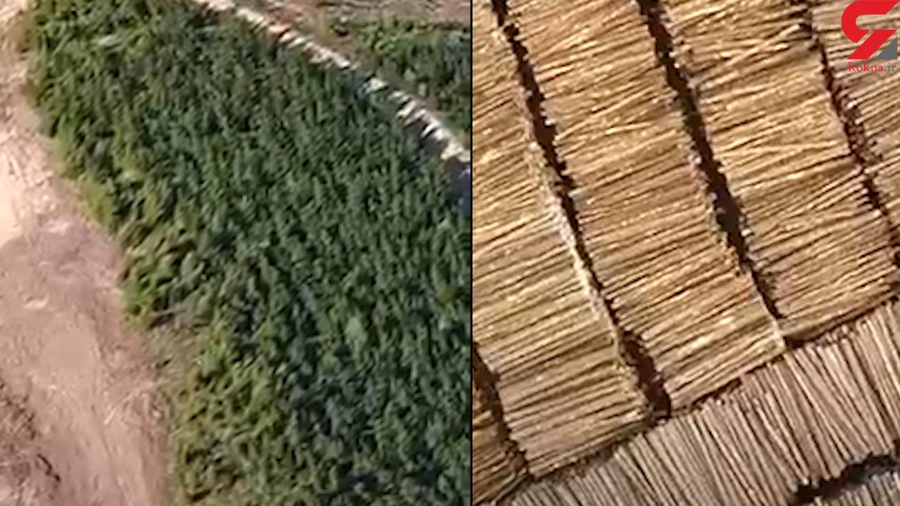 فیلم باورنکردنی / ساخت جنگل وسیع و طبیعی در کمتر از یک روز