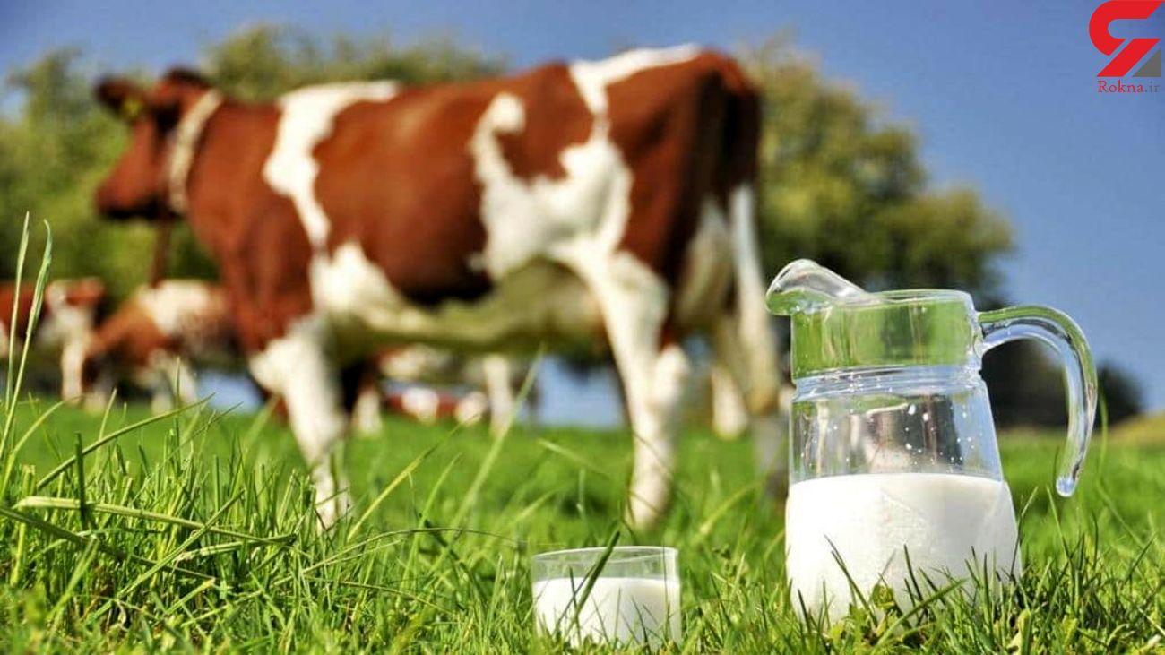 قیمت هر کیلو شیر خام ۶ هزار تومان / توزیع قطره چکانی نهاده های دامی با نرخ مصوب