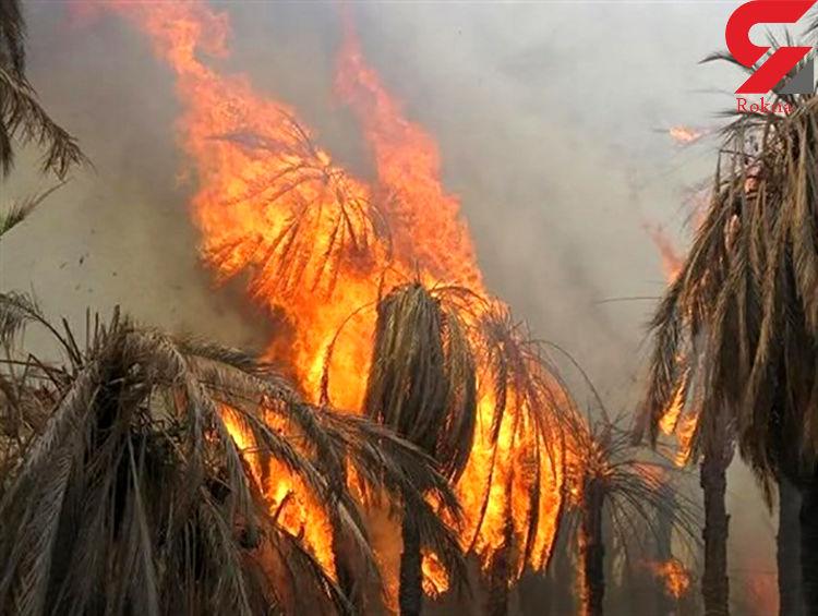 آتش به جان نخلستانهای بزمان افتاد
