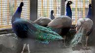باغ پرندگان قم را بیشتر بشناسید + عکس