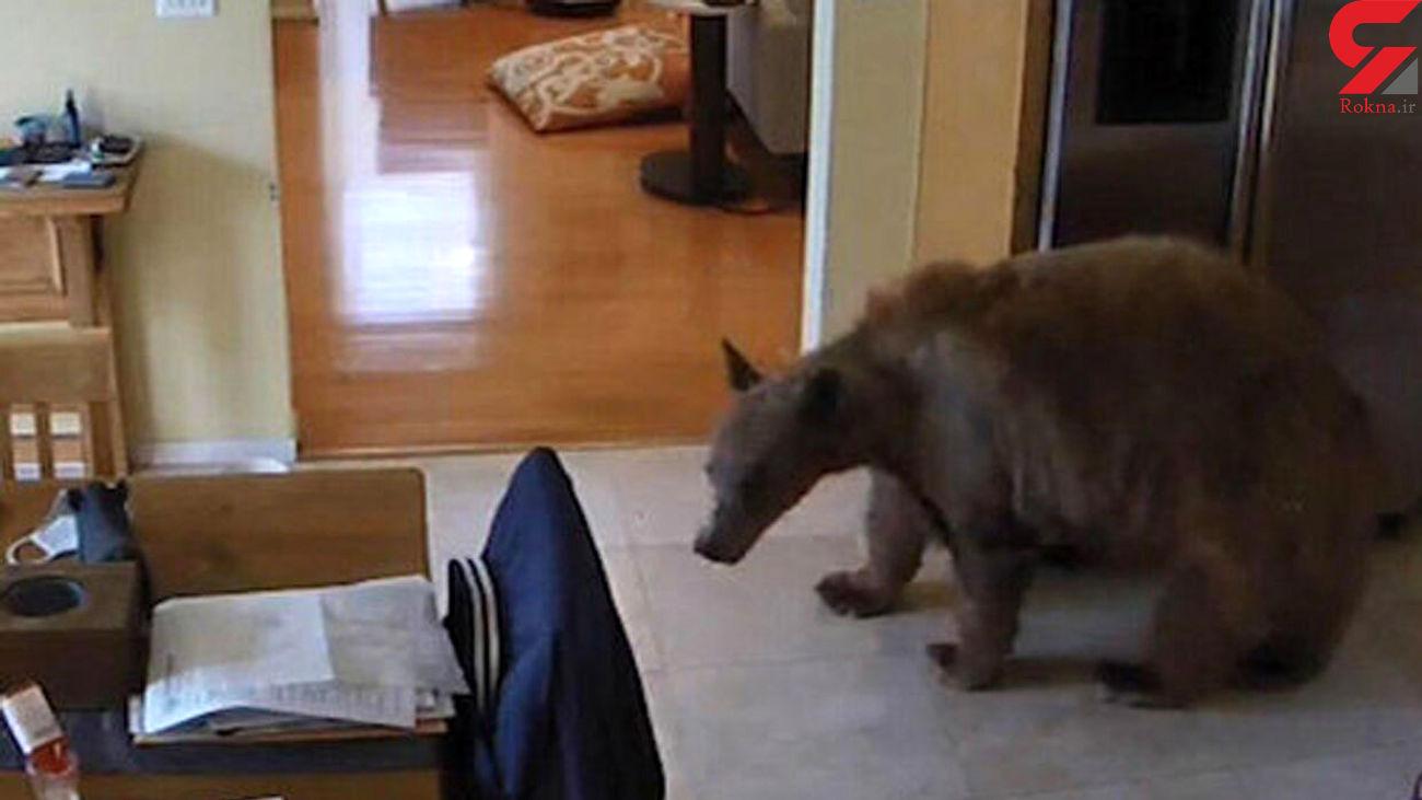 وحشت این خرس از 2 توله سگ را ببینید + فیلم
