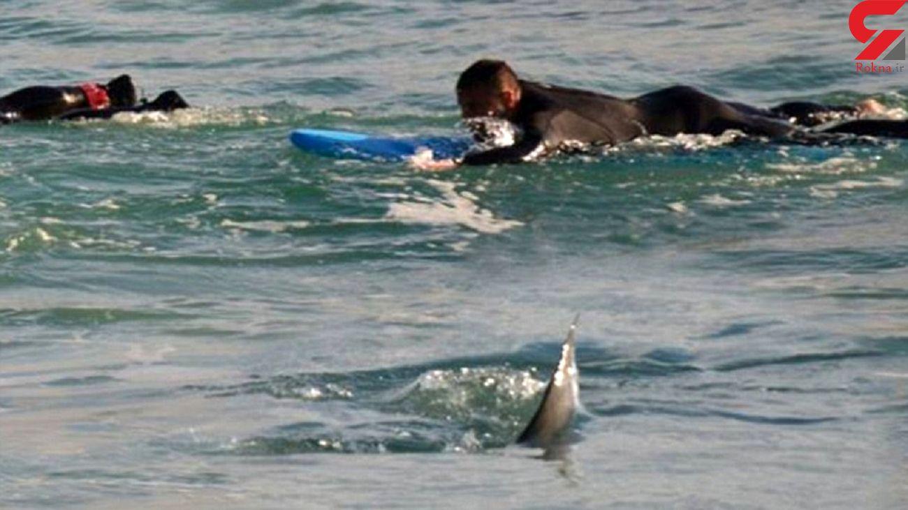 حمله کوسه به یک غواص محلی در ساحل استرالیا