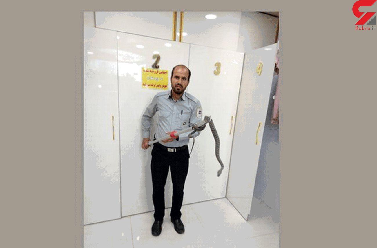 وحشت مردم تبریز از یک موجود هولناک + عکس