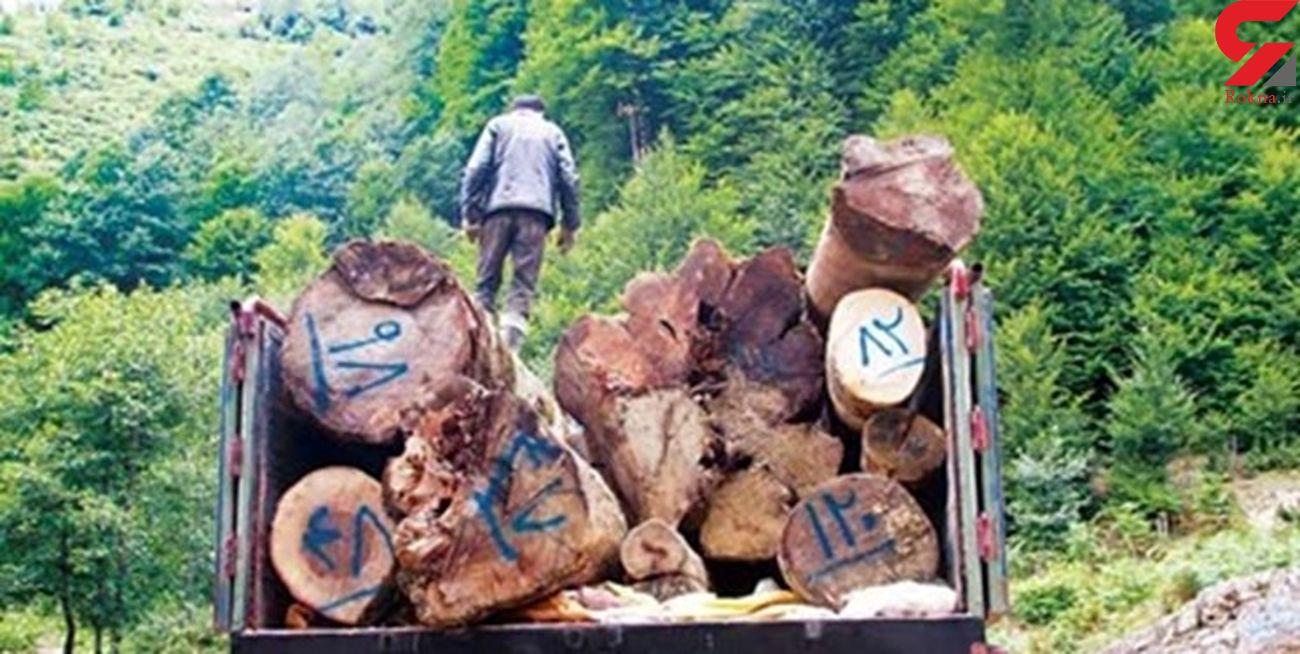 15 تن چوب قاچاق در قروه کشف شد