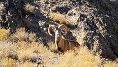 شکارچیها منصورآباد رفسنجان حافظ حیوانات هستند!