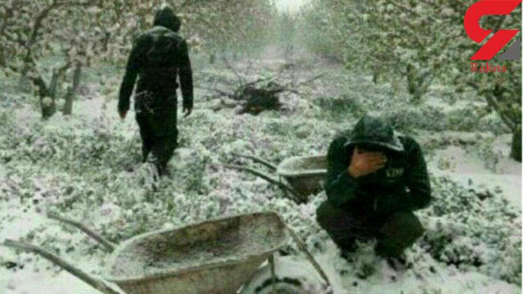 تلخ ترین صحنه از گریه های مردآذربایجانی در باغ پر از برف + عکس