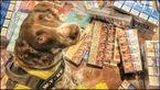 قاچاقچیان موادمخدر برای لاشه این سگ پلیس جایزه بزرگی تعیین کردند+ عکس