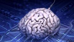 چرا مغز انسان از حیوانات بزرگتر است؟