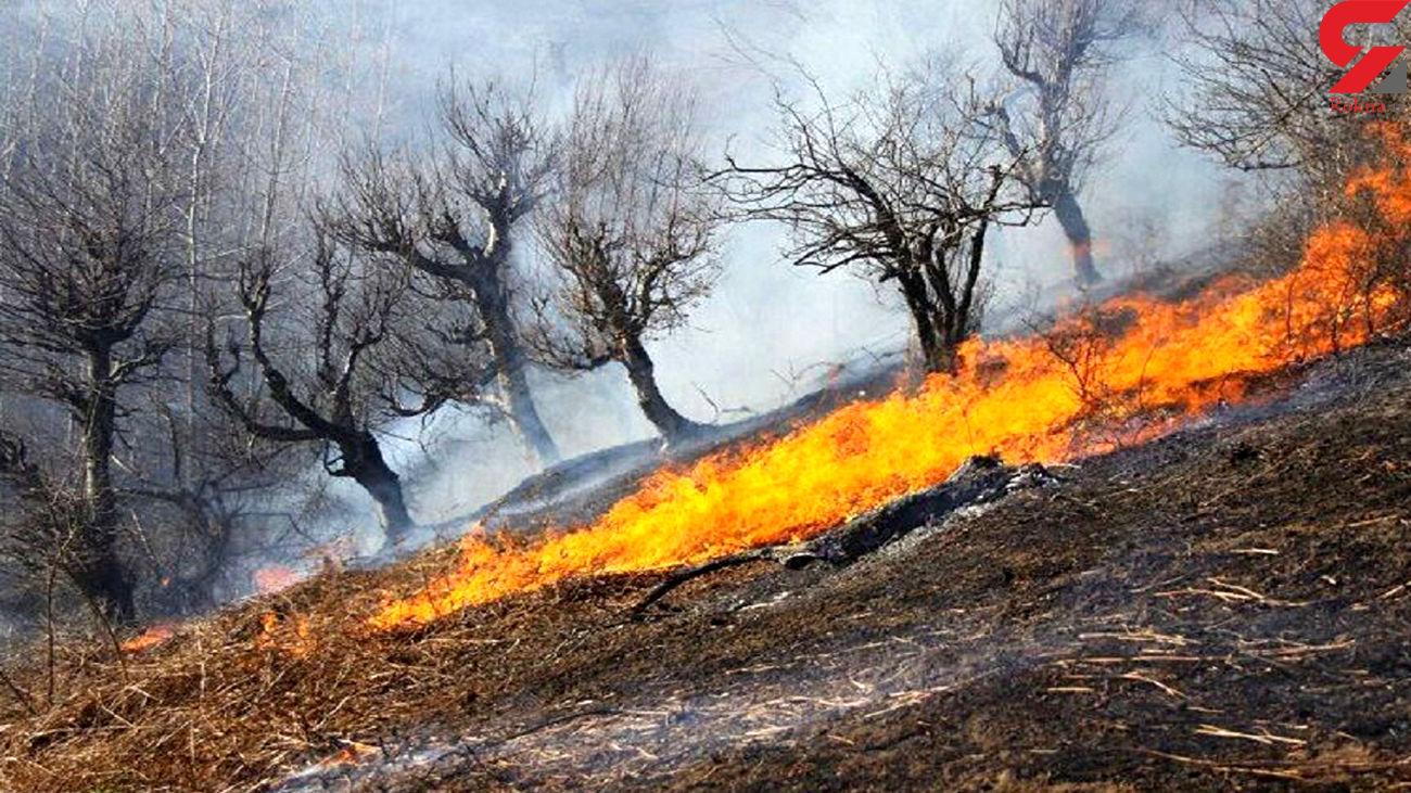 2  هکتار از جنگل باغ شادی خاتم در آتش سوخت