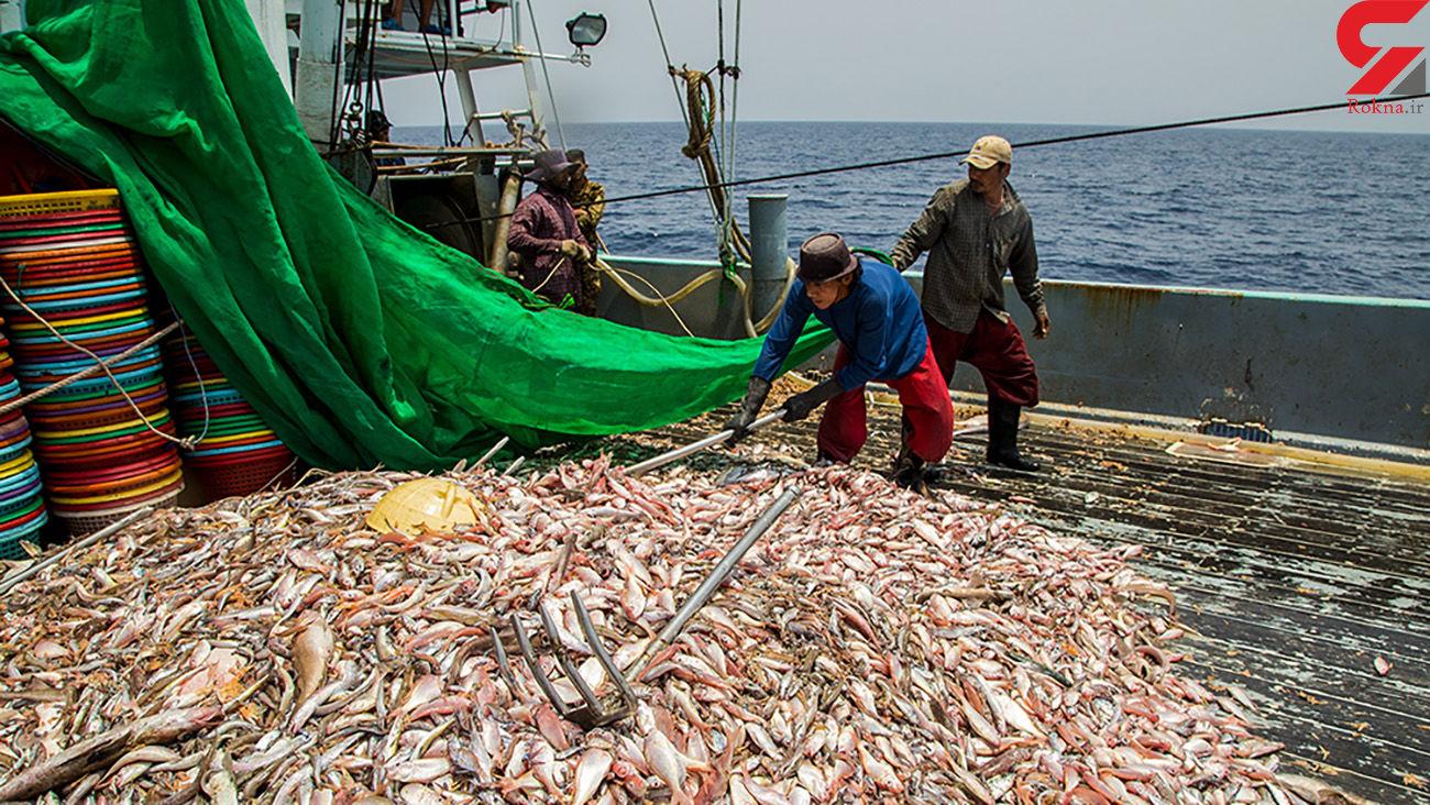 صید ترال با ذخایر آبزیان خلیج فارس چه می کند