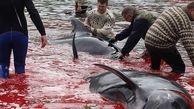 قتل دلخراش نهنگ ها به خاطر یک سنت قدیمی+عکس