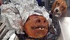 پیدا شدن چمدانی پر از خوک در فرودگاه+عکس