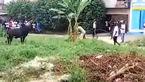 حمله وحشتناک گاو به مردم روستایی + فیلم