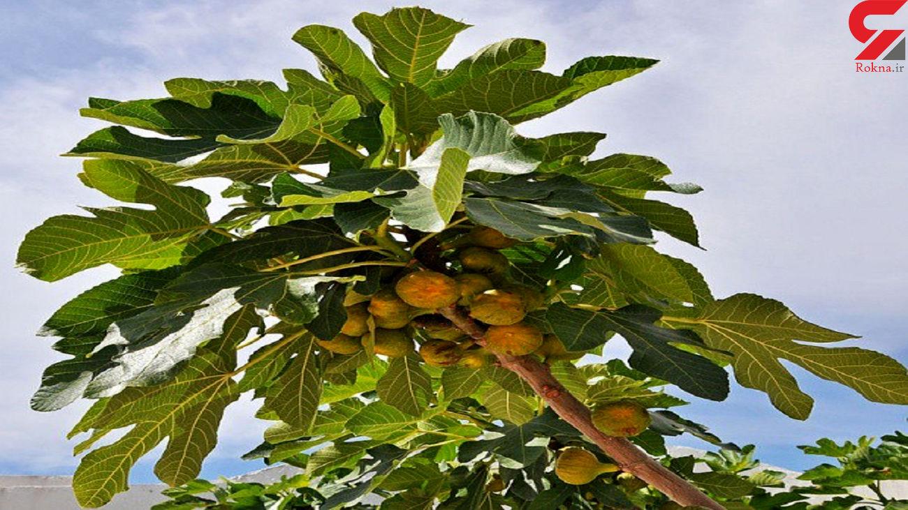 رازهای جالب این میوه ها فاش شد