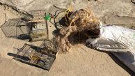 دستگیری شکارچیان سهره طلایی در دزفول