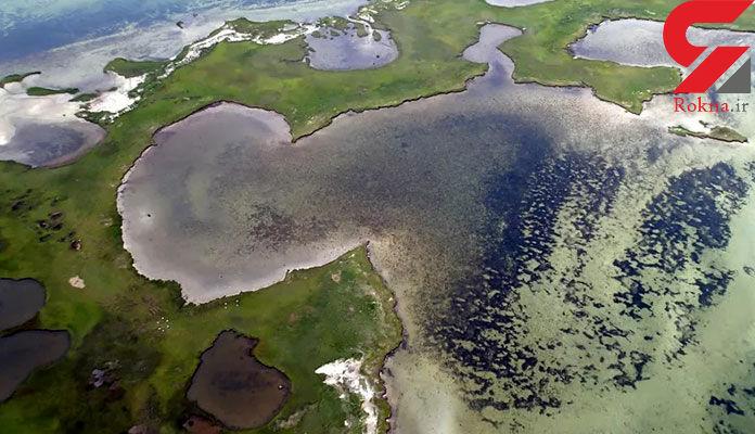 علف دریایی دوباره رشد کرد/در خلیج چزاپیک