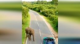 چند لحظه در این پارک ملی سریلانکا قدم بزنیم + فیلم