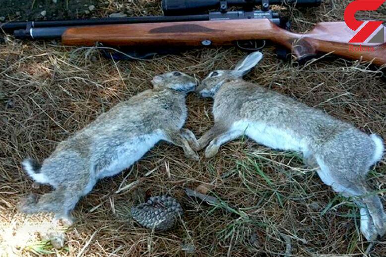 دستگیری 4 شکارچی خرگوش در سمنان