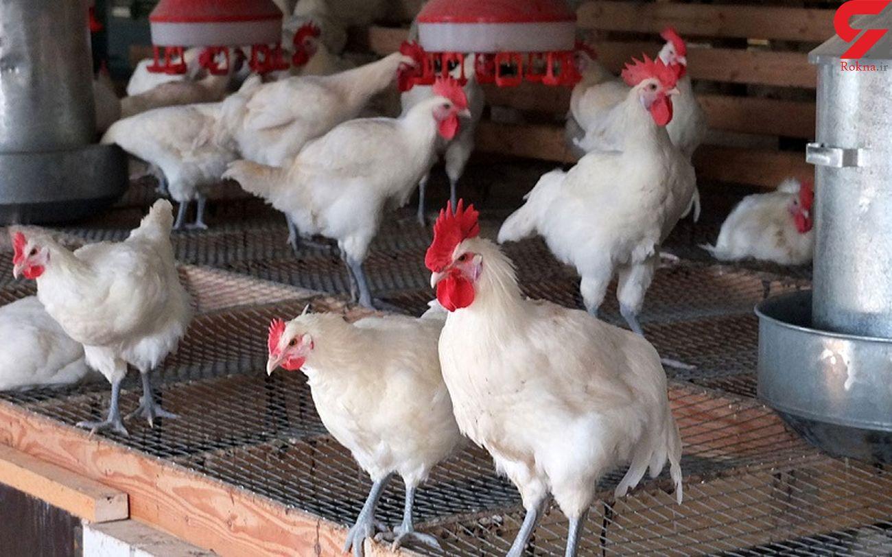 بار قاچاق مرغ زنده و لوازم خانگی به مقصد نرسید/ دستگیری چهار نفر