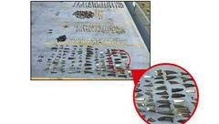 دستگیری 10 ماهیگیر که بال کوسه قاچاق می کردند / این کار سود میلیاردی دارد+ عکس