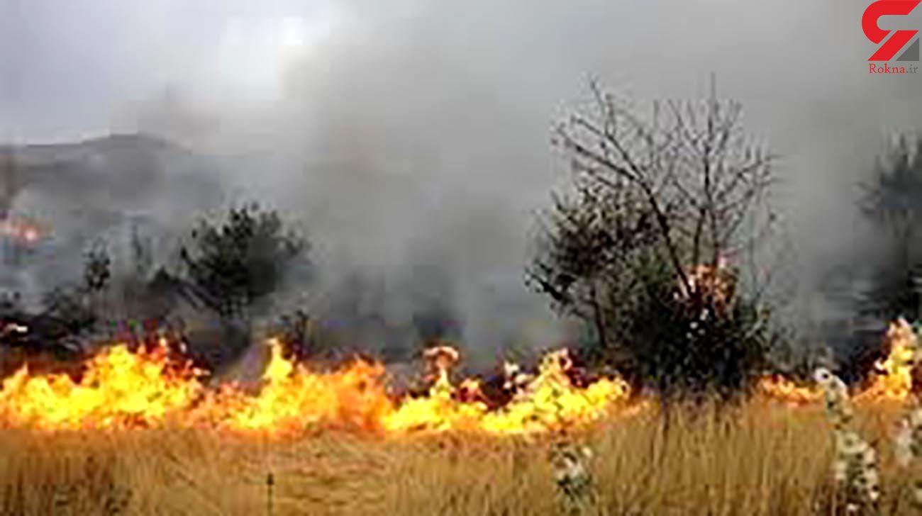 جزئیاتی از آتش سوزیهای مکرر در میانکاله
