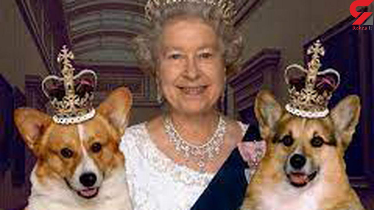 دو قلاده سگ جای خالی همسر ملکه انگلیس را پر می کنند