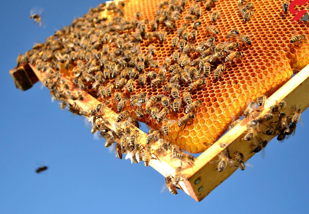 پیش بینی تولید ۴۰ تن عسل در شهرستان آبدانان