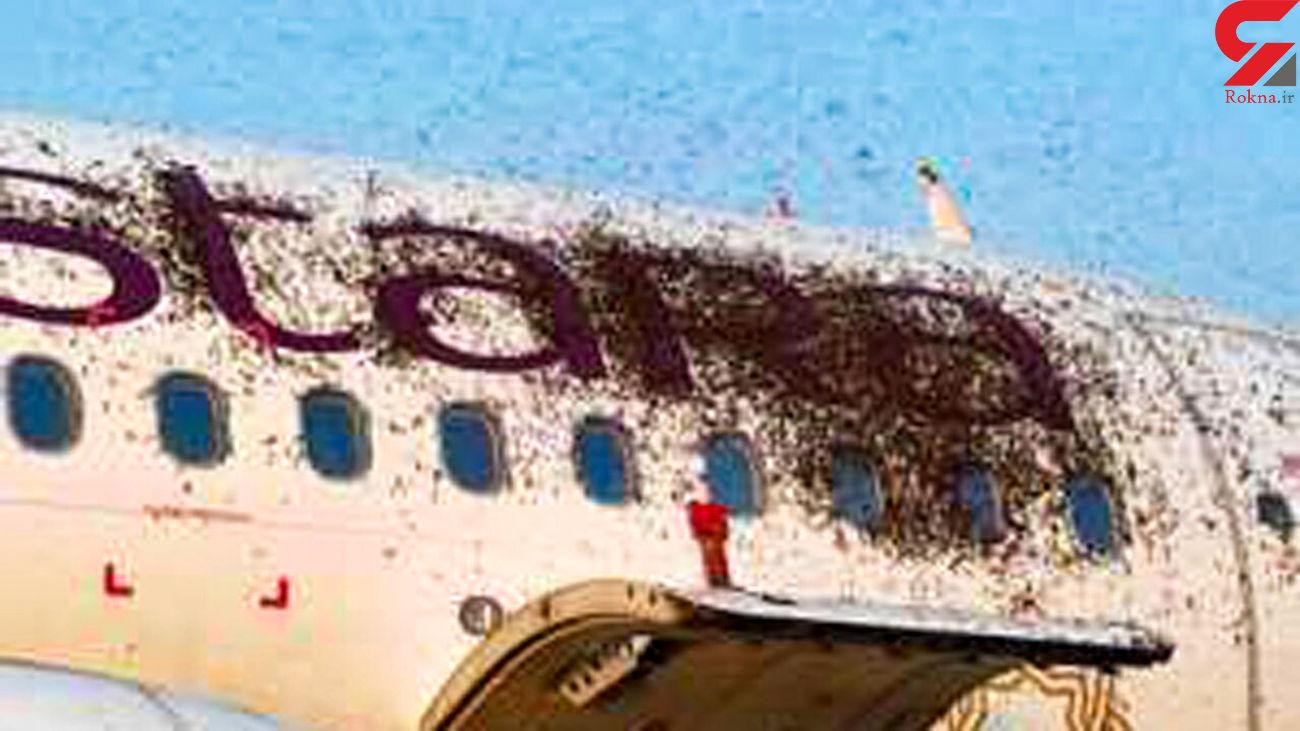 هزاران زنبور به هواپیمای مسافربری یورش کردند + فیلم