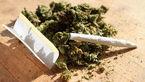 10 نکته درباره مخدر «گل»