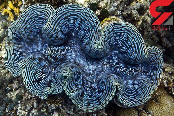 خاطرات حلزون های دریایی به یکدیگر منتقل می شود