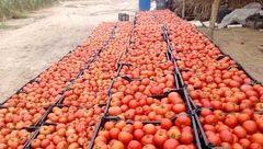 گوجه امروز در بازار میوه و تره بار تهران نایاب شد !