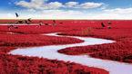 ساحلی عجیب که در پاییز قرمز می شود+عکس