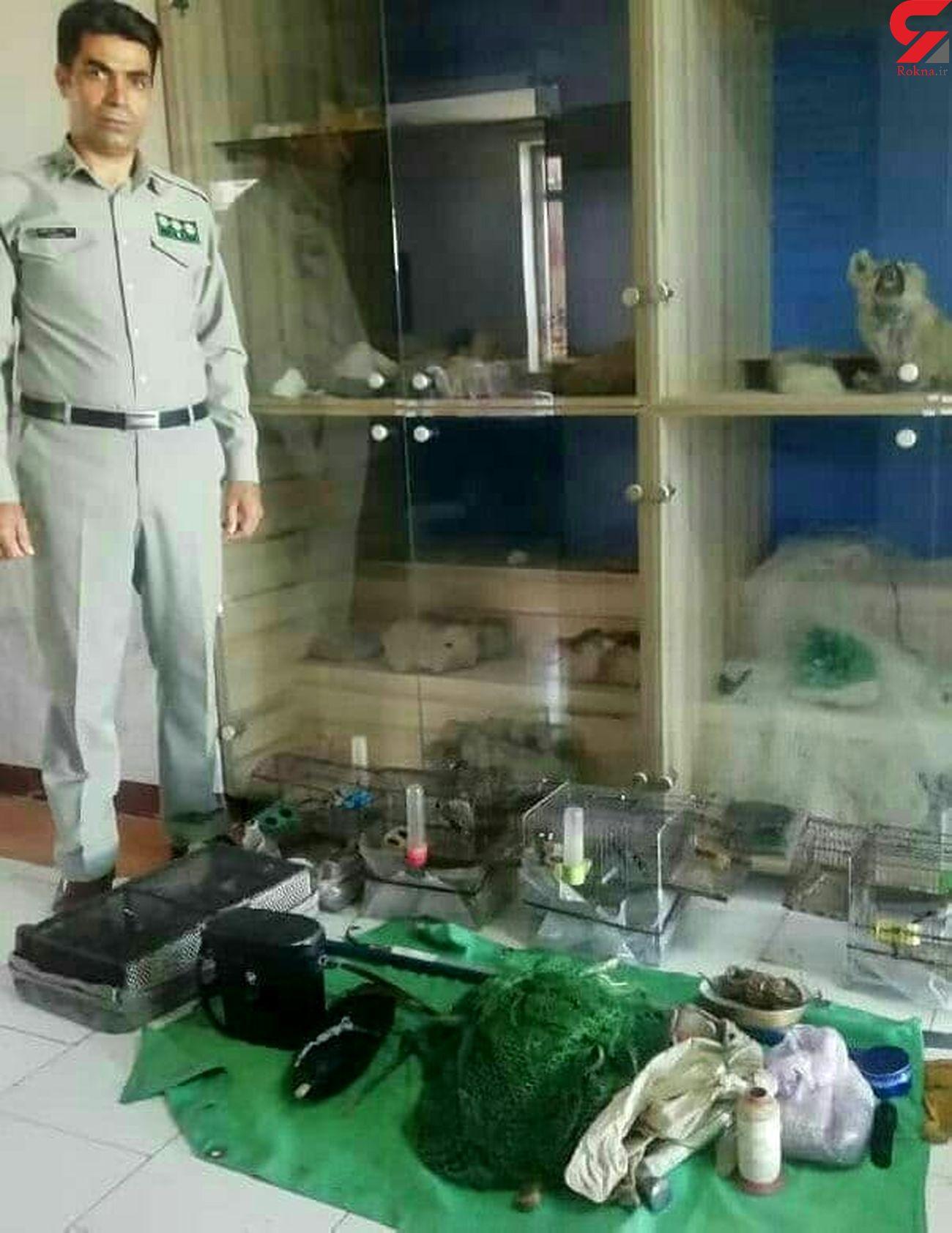 دستگیری شکارچی متخلف در هشترود