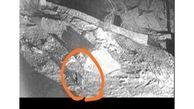 ضبط تصویری از پلنگ حین شکار در منطقه حفاظت شده دنا