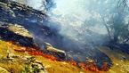آتشسوزی منطقه بهمرد دشتستان عمدی بود / عاملان دستگیر شدند
