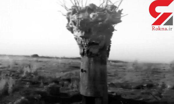 نقش عجیب درختان در جنگ جهانی اول که شاید ندانید +تصاویر