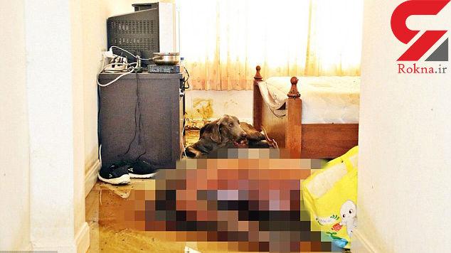 سگی گرسنه صورت جسد صاحبش را خورد + تصاویر