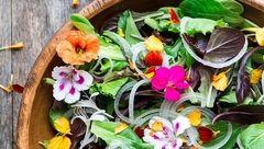 11 برگ گیاهی با خواص درمانی