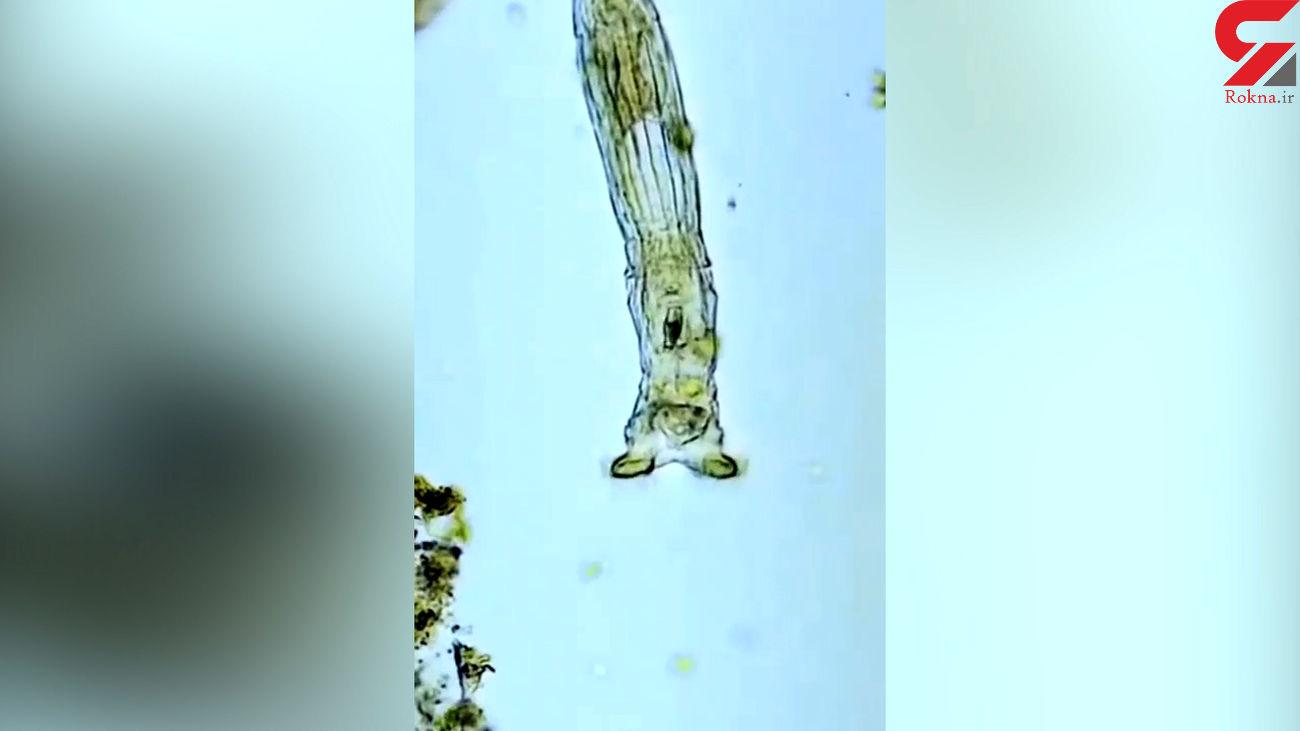 آب دریا در زیر میکروسکوپ چه شکلی است؟ + فیلم