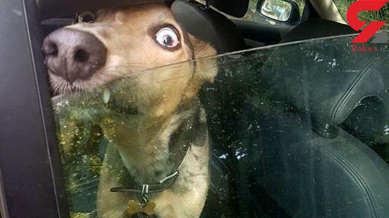 آزارهای یک راننده ، سگ بیچاره را به گریه انداخت +عکس