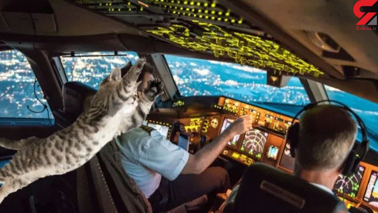 Passenger plane forced to make emergency landing after 'stowaway cat attacked pilot'