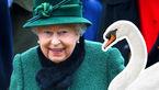 قوانین عجیبی که «ملکه انگلیس» از انجام آنها مستثنی است! + تصاویر